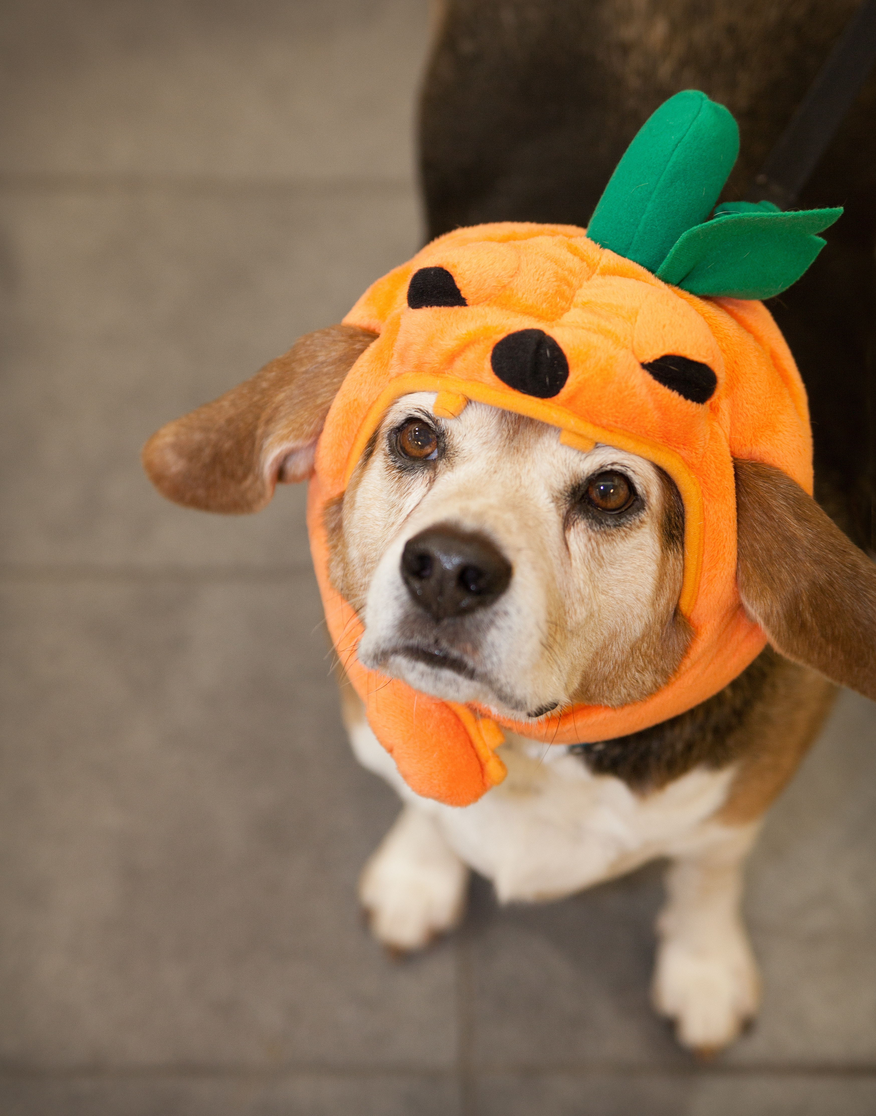 Pets and Halloween